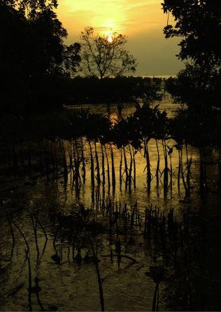 Mangroves #1