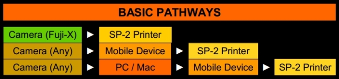 Basic-Pathways